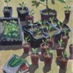 Seedlings in May